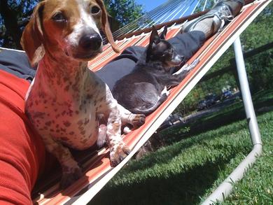 Sunning-on-the-hammock