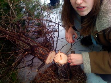 Tree_felling