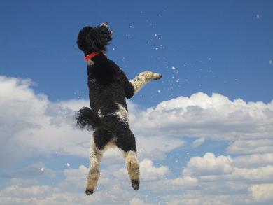 Tucker-goes-skyward