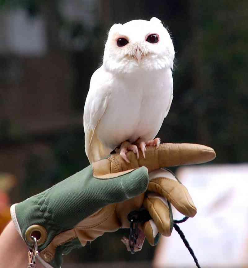 16 Животни, за които никога не сте подозирали, че може да бъдат албиноси 11