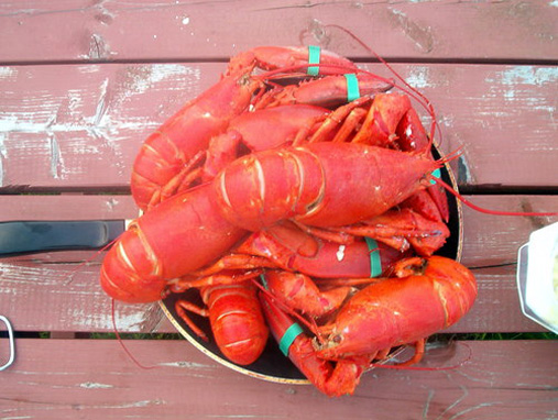 These are lobsters  Lobster For Sale