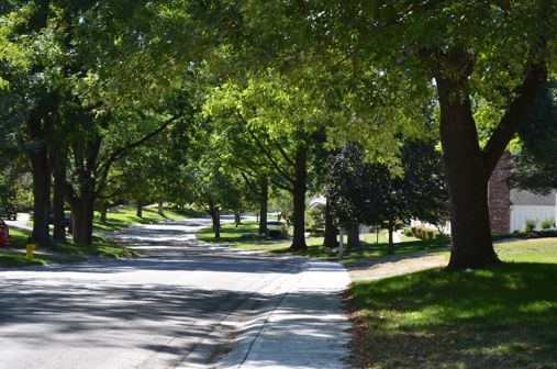 Ash trees are concentrated along the streets of many of northern parts of Prairie Village. An Emerald Ash Borer infestation could ultimately render streets like these nearly baren.