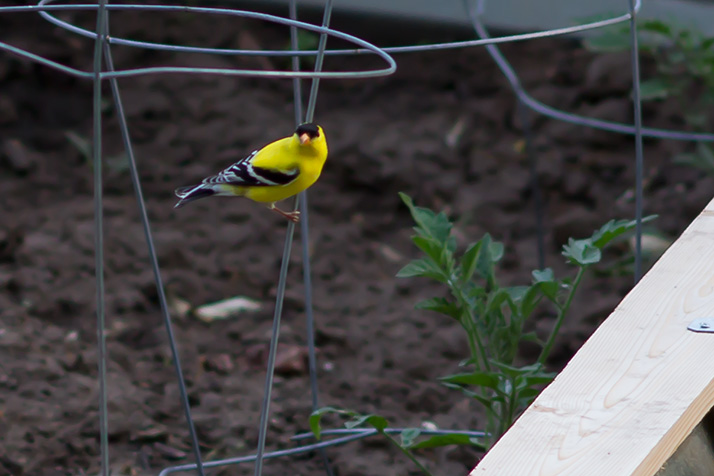 Bird_Backyard