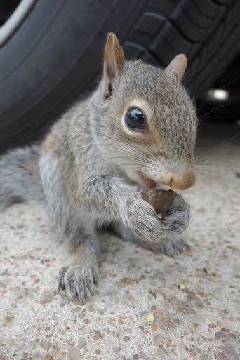 Pip, the Easter Squirrel.