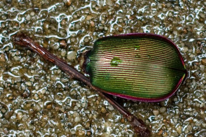 Beetle_Kansas