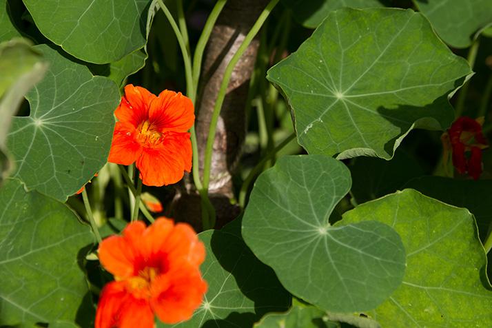Flower_Garden_Prairie_Village