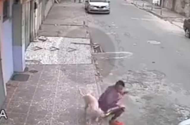 Perro-callejero-le-hace-tremenda-travesura,-y-de-castigo...-lo-adopta