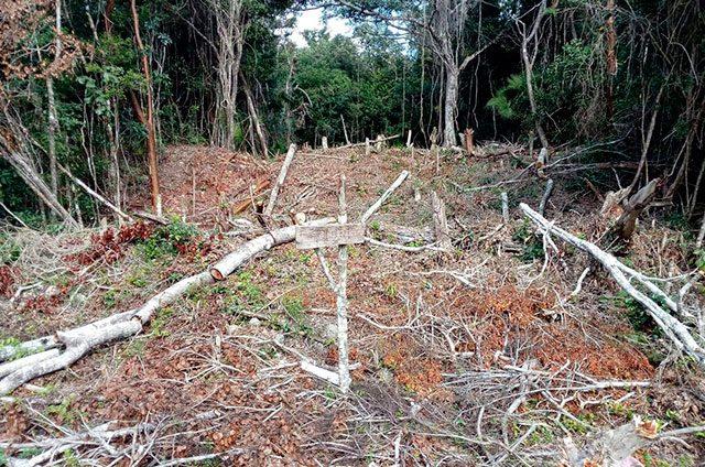 Invaden-tierras-destinadas-como-reservas-forestales