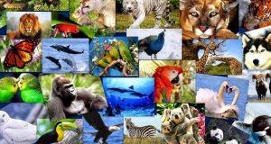 Especies-amenazadas-record-2017