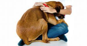 estres-perros-pirotecnia