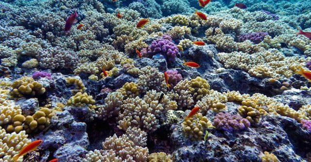 arrecifes-de-corales-amenazados