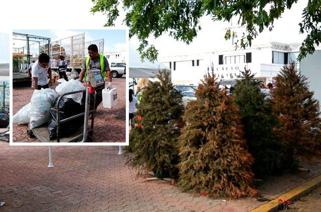 """Recibe-""""Reciclatón""""-más-de-300-árboles-navideños"""