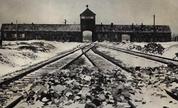 Auschwitz_1236108791_crop_178x108