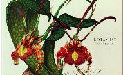 Botanist_-_iv-_flora_1404393456_crop_178x108