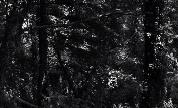 Tripeo_video_1409926708_crop_178x108