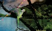 Maurice_louca_1415206379_crop_178x108