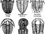 Trilobites01_copy_1417427515_crop_156x120