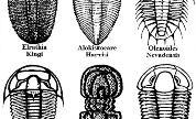 Trilobites01_copy_1417427515_crop_178x108