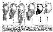 Skulls_chart_1418826365_crop_178x108