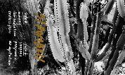 Stromboli_cassette_front_1423502499_crop_178x108