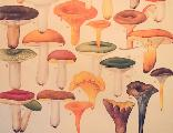 Shrooms_1449089521_crop_156x120