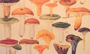 Shrooms_1449089521_crop_178x108