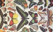 Butterflies_size_1481741252_crop_178x108