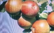 Tvam_1540404479_crop_178x108