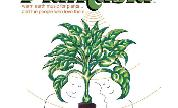 Sbr3030-plantasia-300_1024x1024_1553264378_crop_178x108