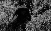 Moor_mother_analog_fluids_of_sonic_black_holes_1574630683_crop_178x108