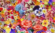 Flower_1272968763_crop_178x108