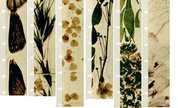 Brackhage_mothlight_filmstrips_1299651568_crop_178x108