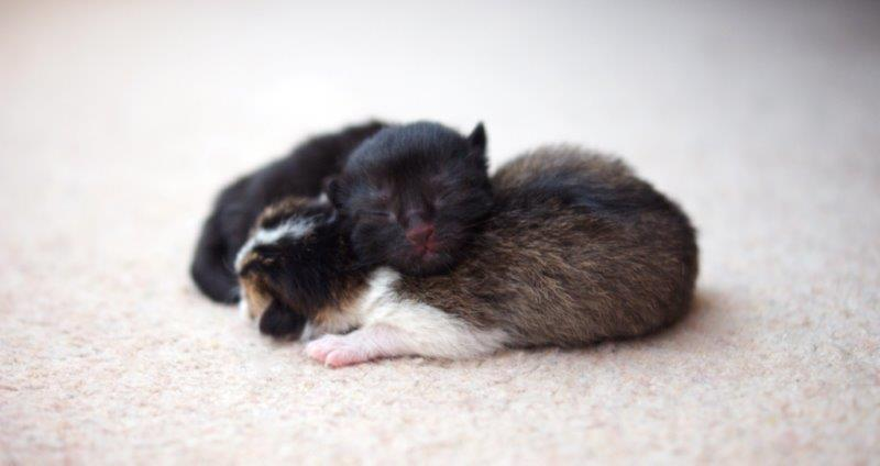 Cute baby rabbit and kitten cuddeling