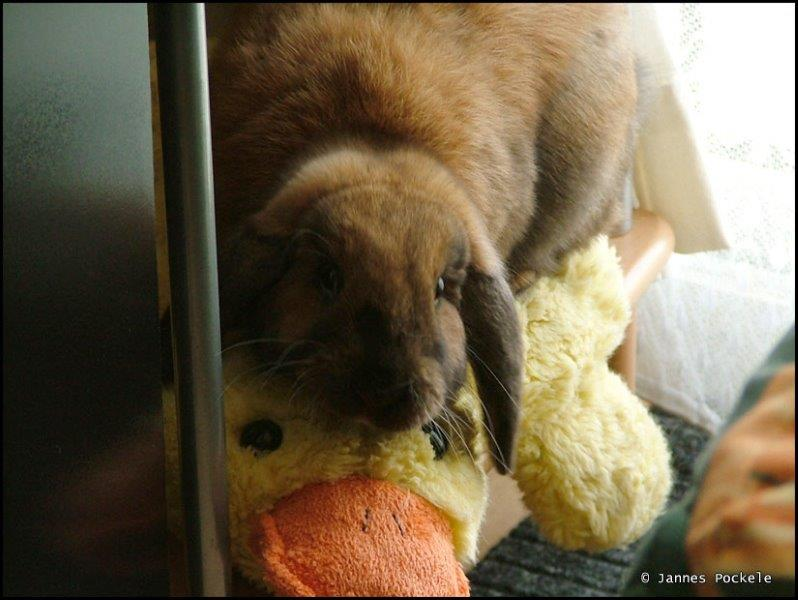 Bunny best friends with a stuffed duck