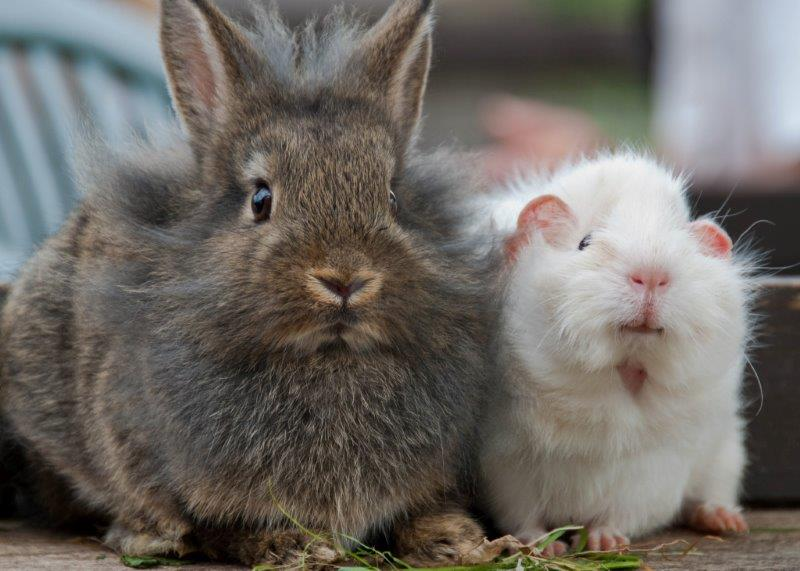 Cute rabbit and rat are best friends