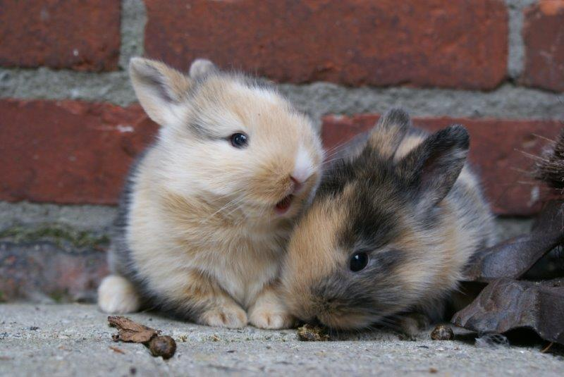 Two adorable tiny bunny friends