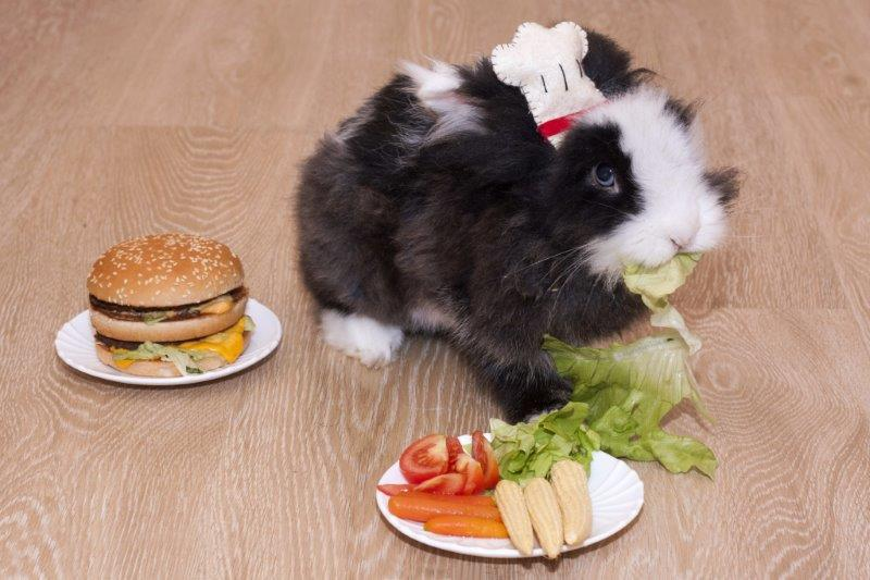 Rabbits eat salad