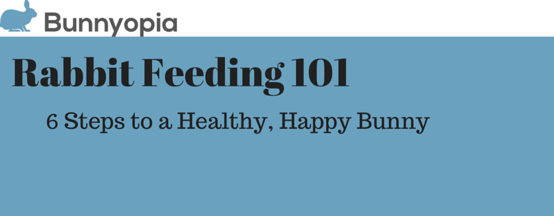Rabbit Feeding 101 Banner