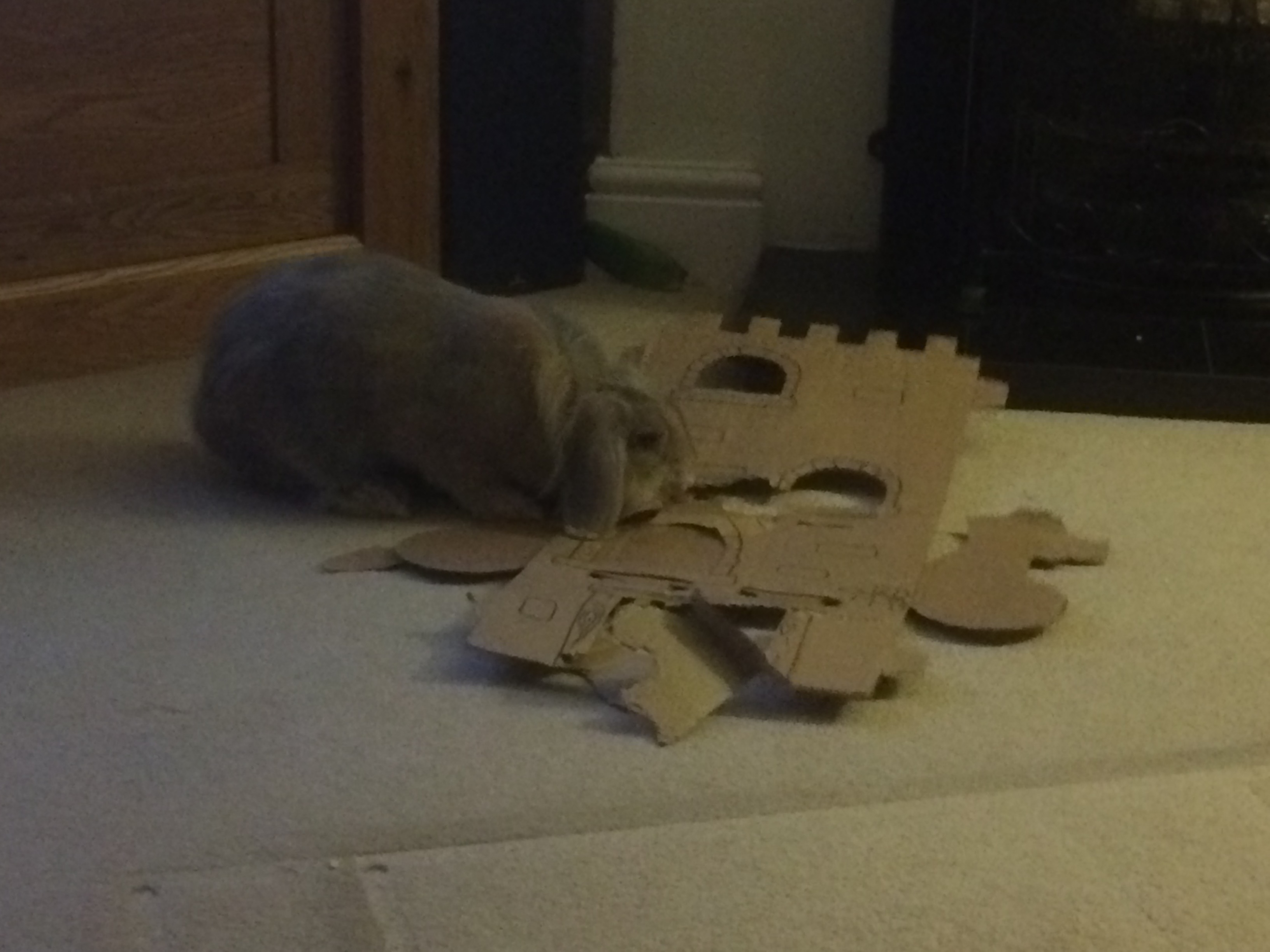 Daisy with her cardboard castle