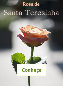 Rosa de Santa Terezinha
