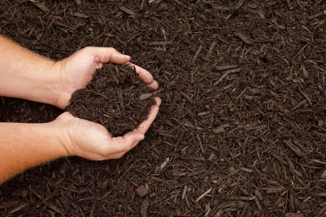 how-to-mulch-flower-beds