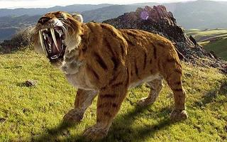 saber tooth tiger ice age  Alex says regardless of how