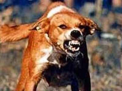 rabid left-wing dog