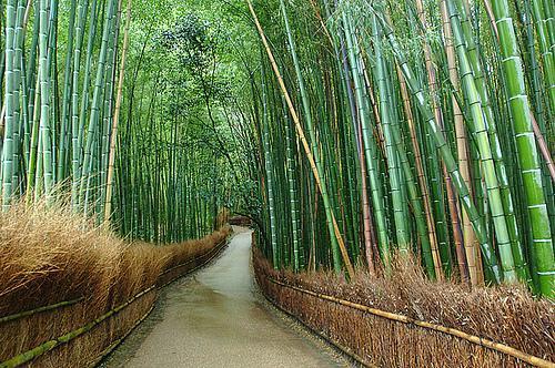 Au milieu des bambous de pierre, la voie s'est révélée