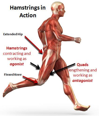 Calves meaning back shoulder pain left side pdf review
