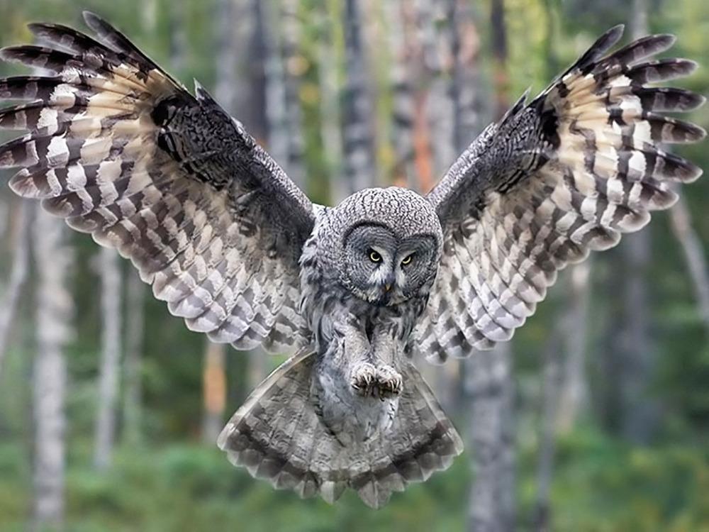 Improve the quality of BBC  Owl