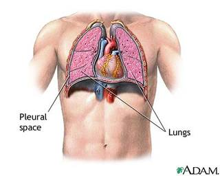 Chest Cavity Heart and Lungs