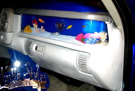 First world poverty for Car fish tank