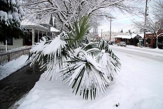 Snow in Miami?