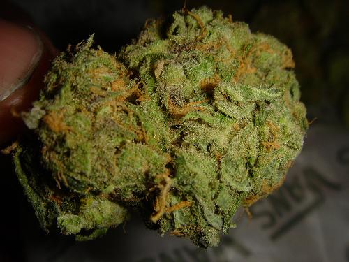 loud weed Gallery